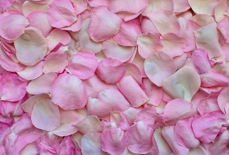 rosenbluetentee