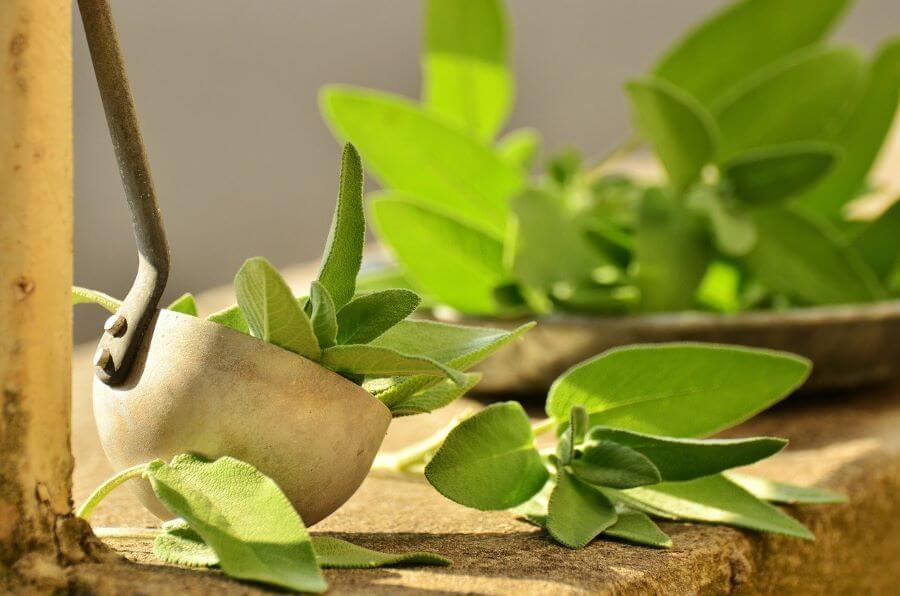 salbeitee-heilpflanze