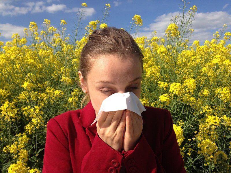 tee-gegen-heuschnupfen-und-allergien