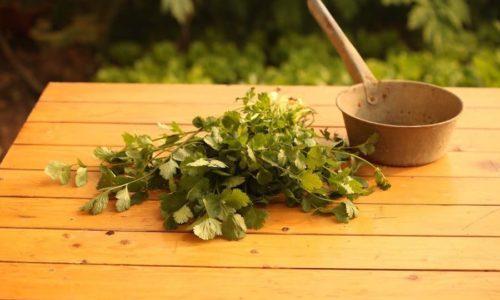 Koriander Tee: Zubereitung, Wirkung & Mehr